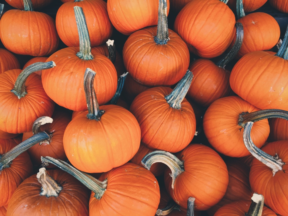 Favorite pumpkin everything!